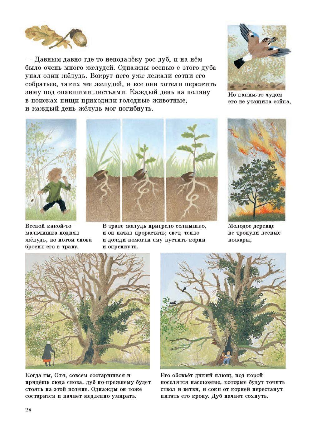 Наше дерево_img_2