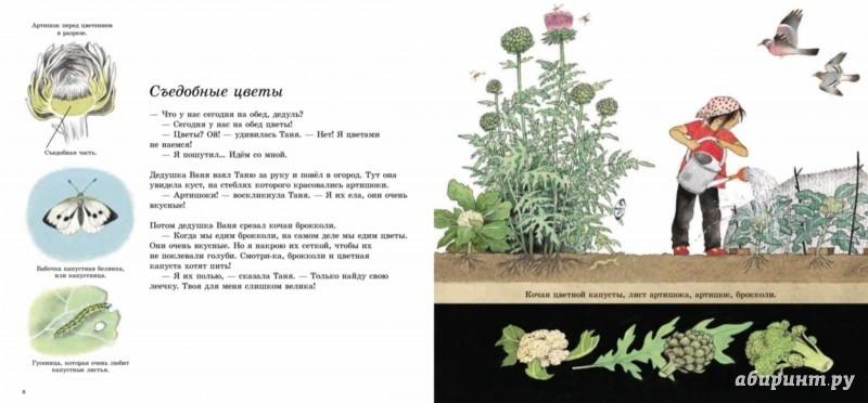 Как растут овощи?_img_1