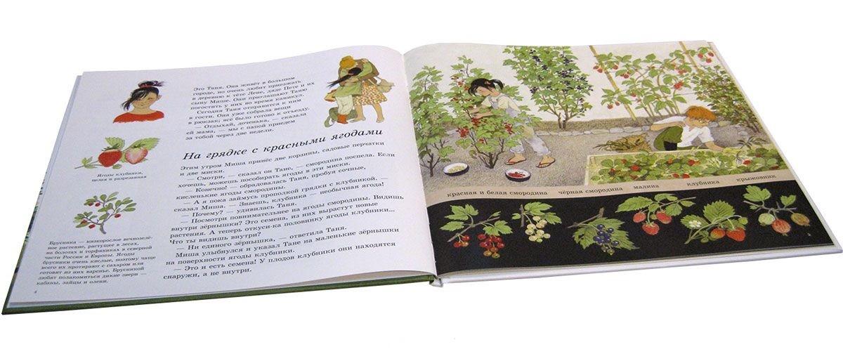 Как растут ягоды, орехи и фрукты?_img_1