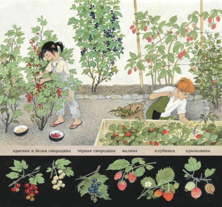 Как растут ягоды, орехи и фрукты?_img_2